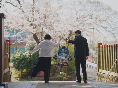 桜に染まるまち、佐倉での七五三撮影