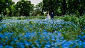 昭和記念公園の花畑でドレス撮影を