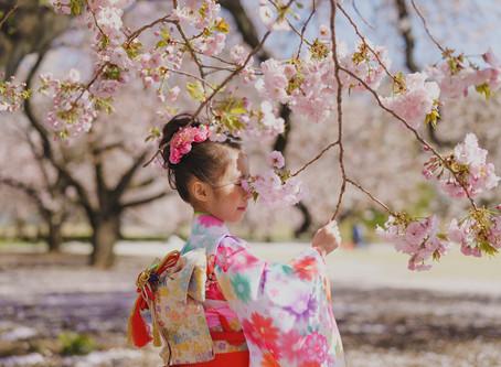 桜の時期に七五三 from 香港