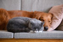 pets at home sleeping