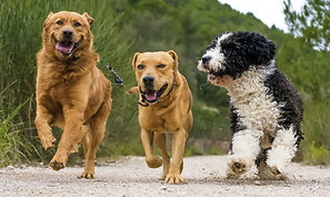 Dogs walking on track