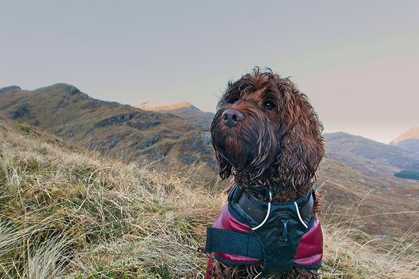Nala the Mountain Dog.jpg