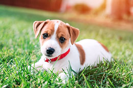 puppy playing on grass