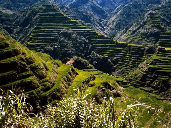 World_Asia_Ancient_Rice_Terraces___Phili