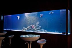 5 meter aquarium