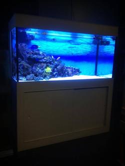 Formica aquarium