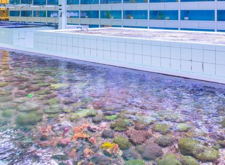 """Aqualife: """"Wij gaan een grootschalige koraal kwekerij bouwen voor De Jong Marinelife"""""""