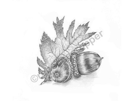 Acorn/Leaf Study