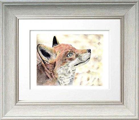 Gazing Fox