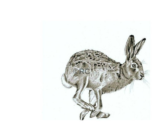 Running Hare 2
