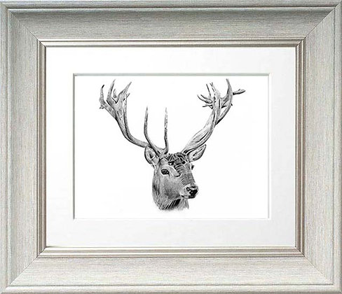 Stag Head 2