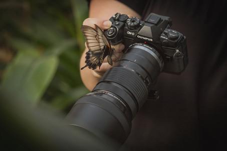 Vlinder op camera