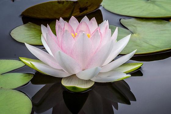 Lotus_Center.jpg