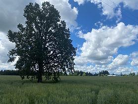 Tree Judd.jpg