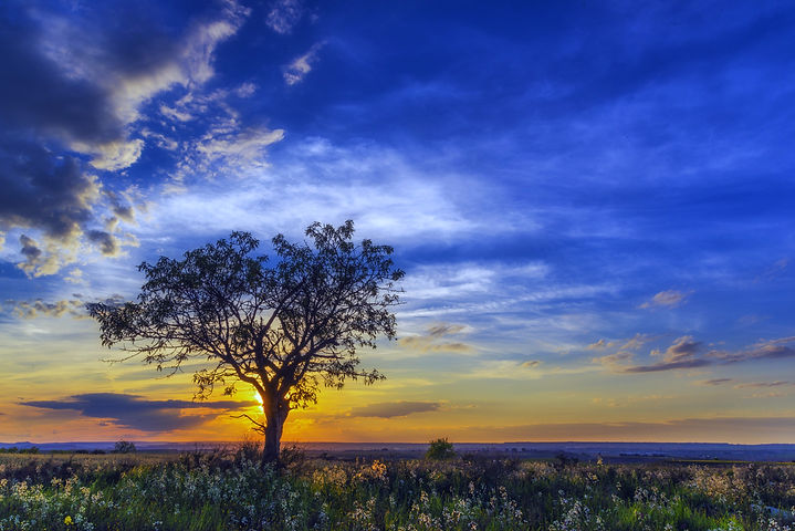 landscape-tree-nature-grass-horizon-branch-637237-pxhere_edited.jpg