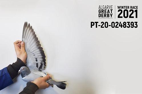 PT-20-0248393