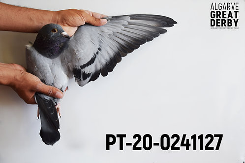 PT-20-0241127