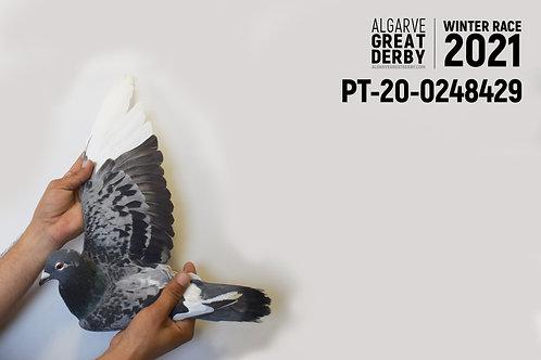 PT-20-0248429
