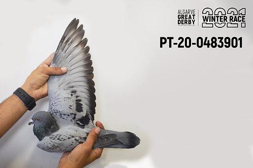 PT-20-0483901
