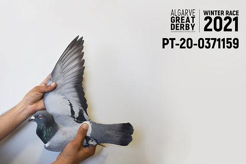 PT-20-0371159