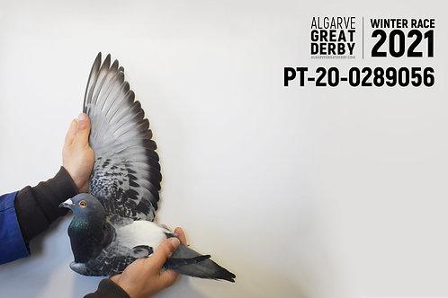 PT-20-0289056