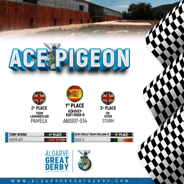 Arte Ace Pigeon.jpg