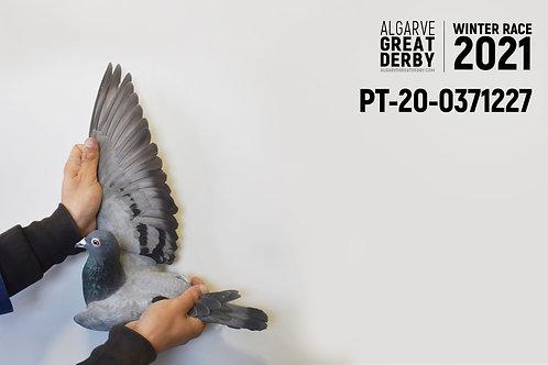 PT-20-0371228