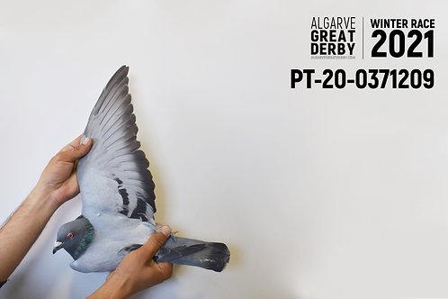 PT-20-0371209