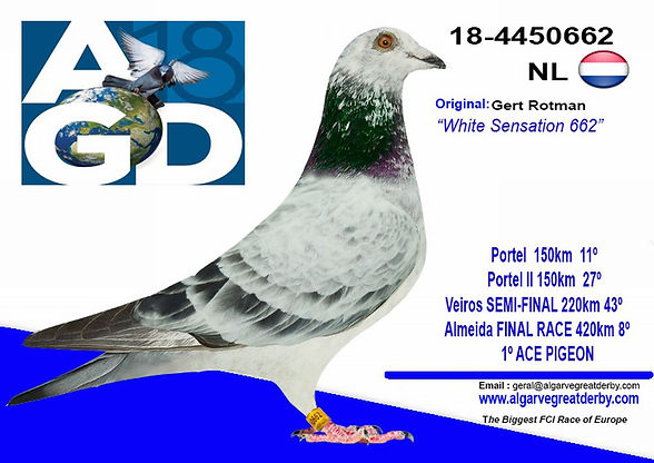 NL-4450662.jpg