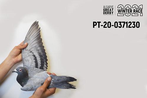 PT-20-0481930