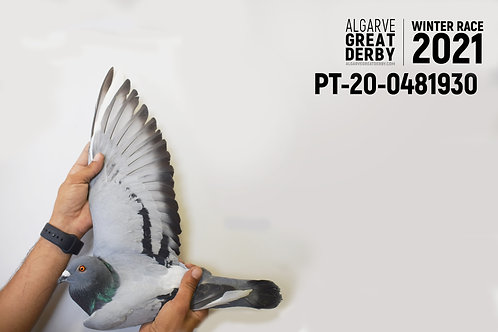 PT-20-0371230