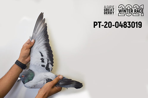 PT-20-0483019