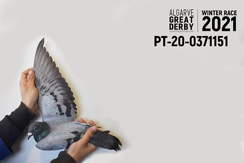 PT-20-0371151