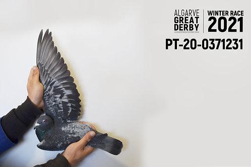 PT-20-0371231