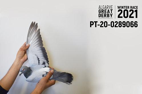 PT-20-0289066