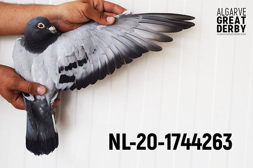 NL-20-1744263