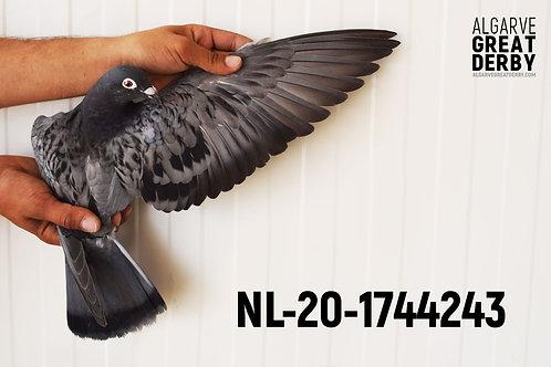 NL-20-1744243