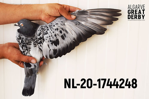 NL-20-1744248