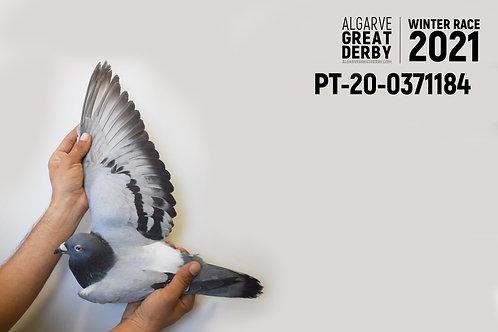 PT-20-0371184