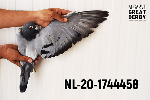 NL-20-1744458