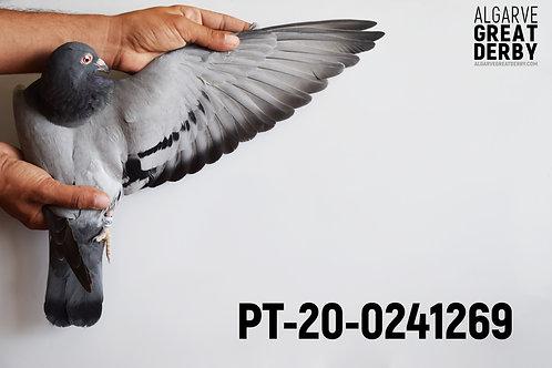 PT-20-0241269