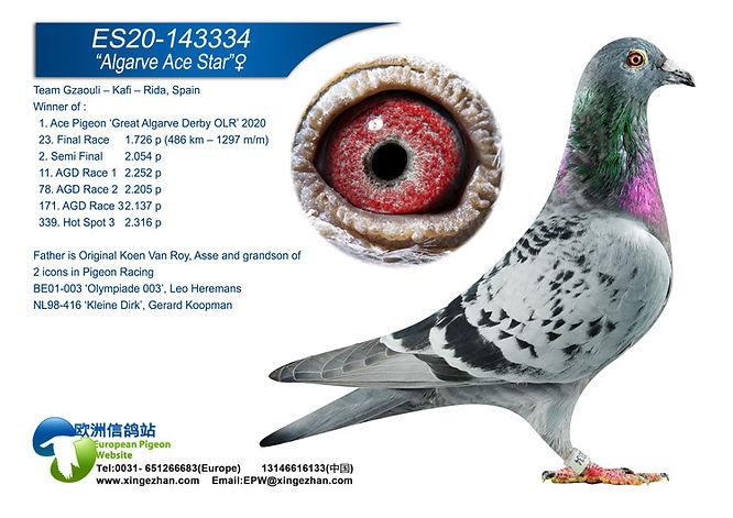 ES-20-143334 (ACE PIGEON).jpg