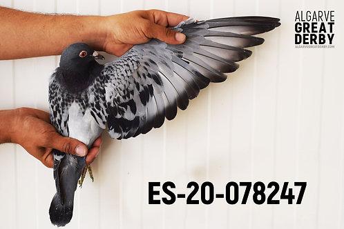 ES-20-078247