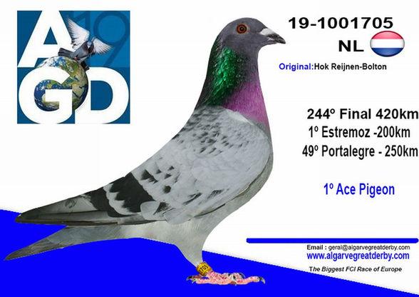 NL-1001705.jpg