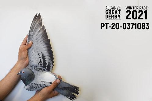 PT-20-0371083