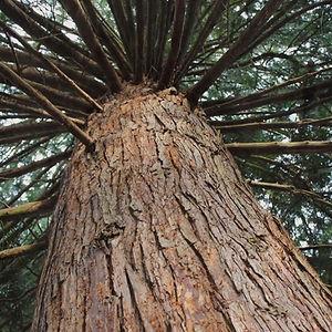 A Tree I Love by Priscilla Stadler
