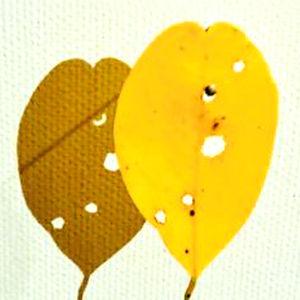 Yellow Trio by Mimi Czajka Graminski
