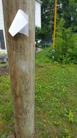 Phone Pole Poetry