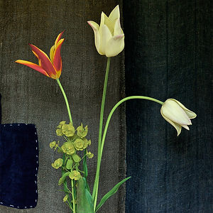 Tulips & Mottainai, a photograph by Dustan Osborn