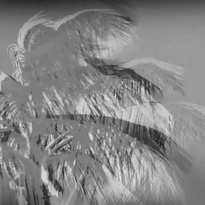 Palm Dance Aruba, a video by Rosalind Schneider